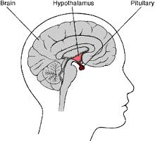 brain_pituitary