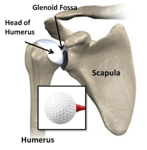 figure-3.-glenohumeral-golf