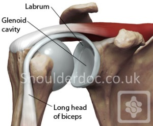 glenoid cavity and labrum
