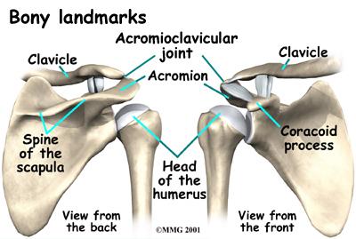 shoulder_acromionclavicular_arthrosis_anat02