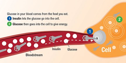 1-Diabetes-Blood-Stream_Final-02.png