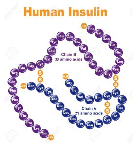 13207592-Human-Insulin-Stylized-chemical-structure--Stock-Vector-insulin-amino-acid