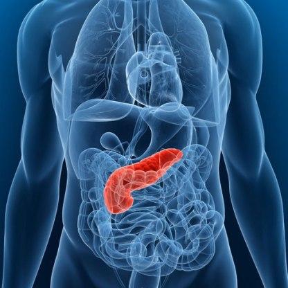 pancreas-120723